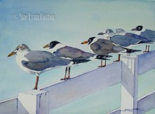 Gulls in the Afternoon Sun $99