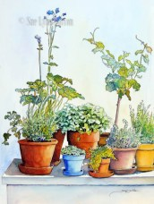 Herbs in the Greenhouse $99