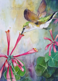 Hummingbird Sipping $99