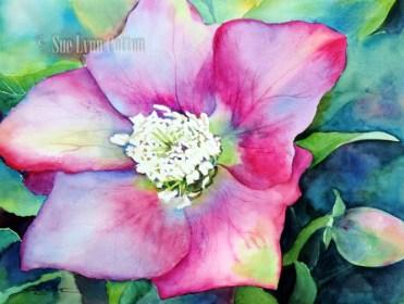 Lenten Rose $99