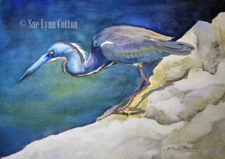 Little Blue Heron $99