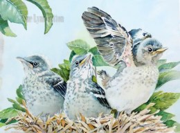 Mockingbird Babies $99