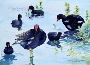 Moorhens with Chicks $99