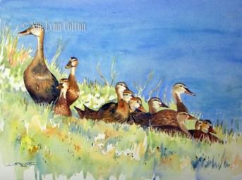 Mottled Ducks by the Pond $99