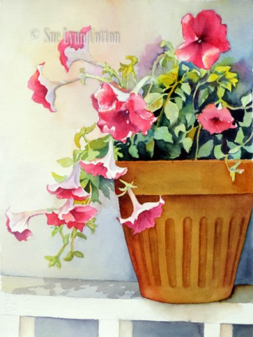 Pink Petunias in Sunlight $99