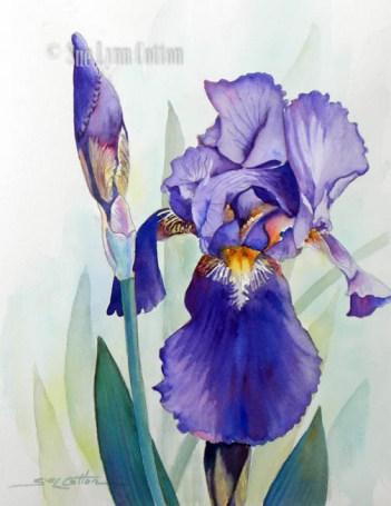 Purple Bearded Iris $88