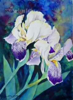 Purple White $99