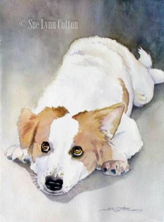 Corgie Down Dog $99