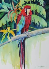 Red_Macaw $99