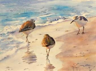 Sanderlings on the Beach $99