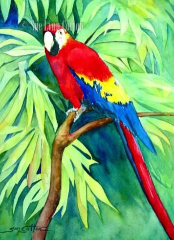Scarlet Macaw $99