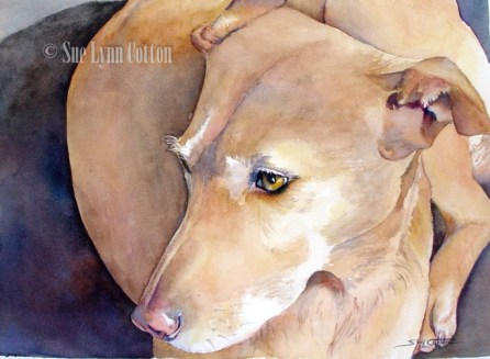 Spirit Dog 499