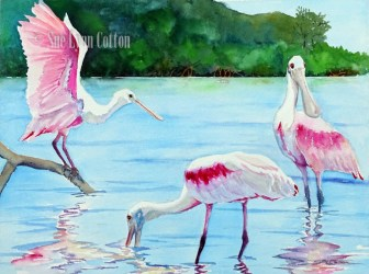 Spoonbills near the Island $99