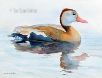 Whistling Duck $99