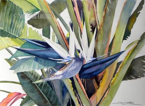 White Bird of Paradise $99