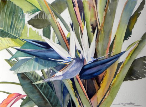 White Bird of Paradise $99