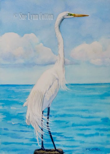 Great White Egret with Mating Plumage $99