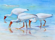 White Ibis by the Shore $99