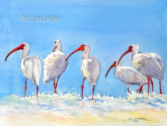 White Ibis in Surf $99
