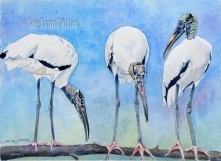 Woodstorks on a Limb $99