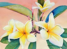 Yellow Plumeria at Sunset $99