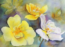 Yellow and White Roses $99