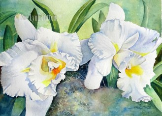 White Orchids $99