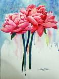 Peonies in Pink $99