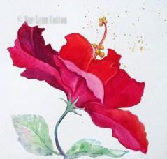 Red Ruffled Hibiscus $195