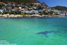 Fish Hoek Beach + Great White