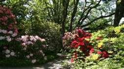 Hendrick's Park Near UofO
