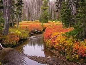 Cascades in Fall