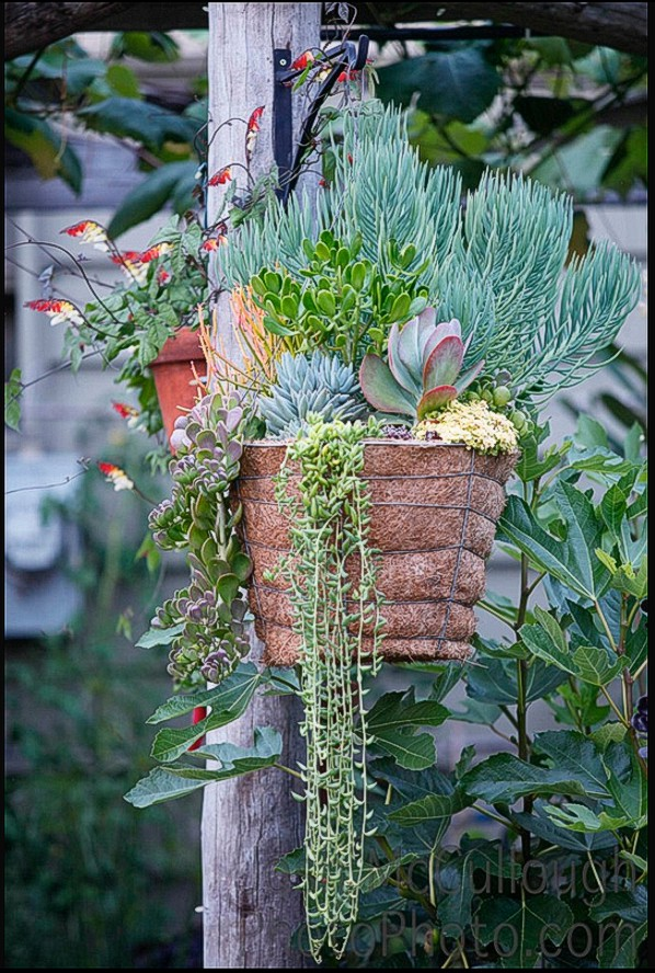Succulents  Herbs  Welcome to Green Life