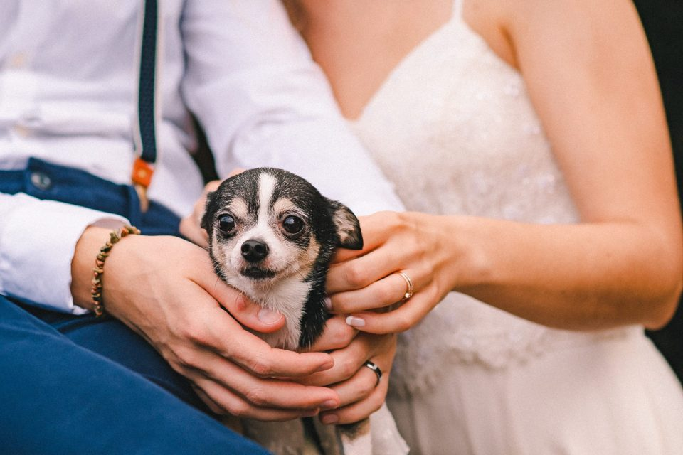 brooklyn-elopement-wedding-photos-with-dog-suessmoments