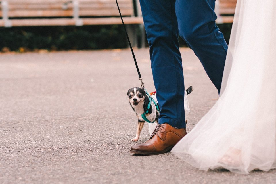 wedding-day-with-dog-suessmoments