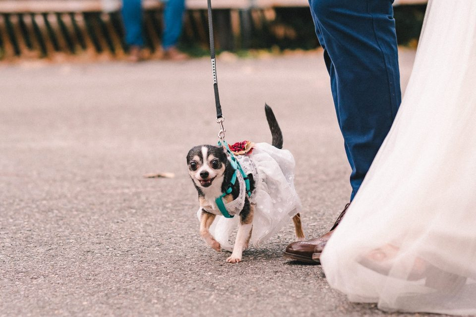wedding-dress-on-dog-brooklyn-photographer-suessmoments