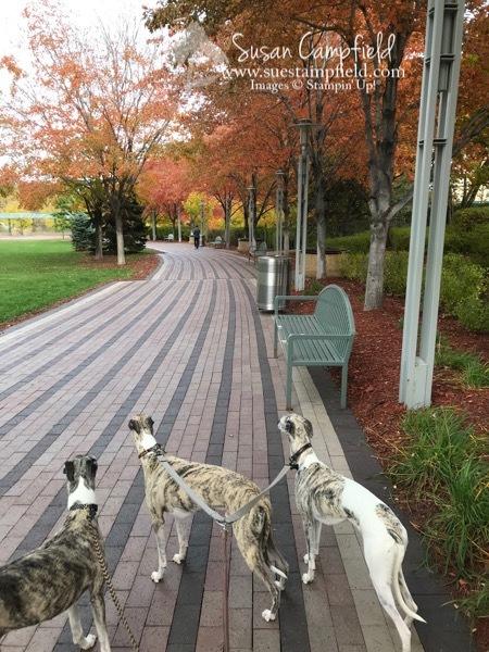 Minneapolis Fall Dog Walk - 1