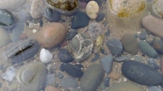 Rockpool with a small live crab