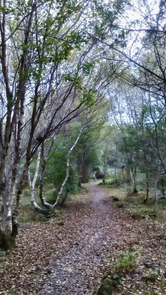 Millennium wood at Duart Castle