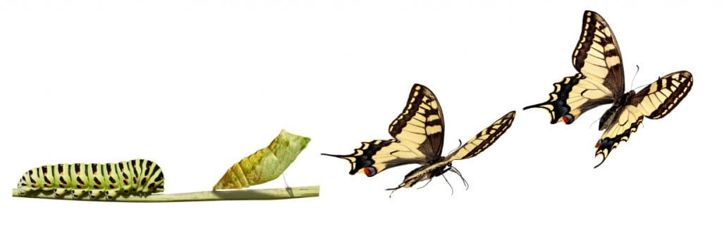 butterfly transformation image from http://quotesgram.com/quotes-about-growth-and-transformation/
