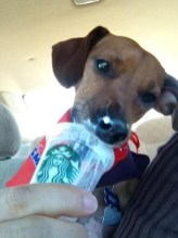 Nothin' says lovin' like a snout of whipped cream!