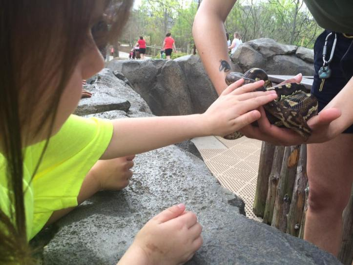Averylee Hobbs petting snake