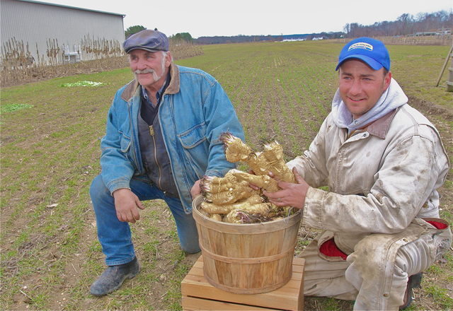 Bayview Farm owner Paul Reeve (right) with his semi-retired farmer Uncle George Reeve local horseradish root they have been busy grinding up for sale in the farmstand. (Credit: Barbaraellen Koch)
