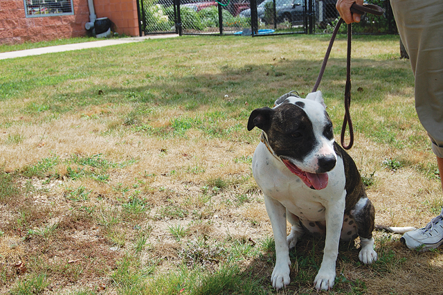 T0813_dogs_lefty_C