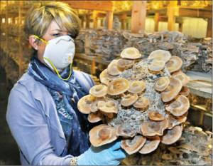 Mushrooms in Cutchogue