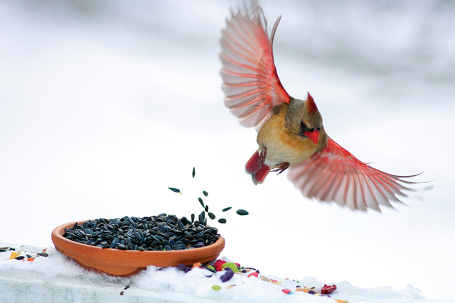 There's something about seeing a cardinal in the snow that just adds to the bird's beauty. This January photo from Katharine Schroeder was my favorite art shot of the year. (Credit: Katharine Schroeder)