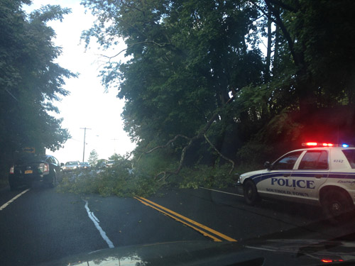 CYNDI MURRAY PHOTO | Traffic was being directed around the tree before 9 a.m. Friday.