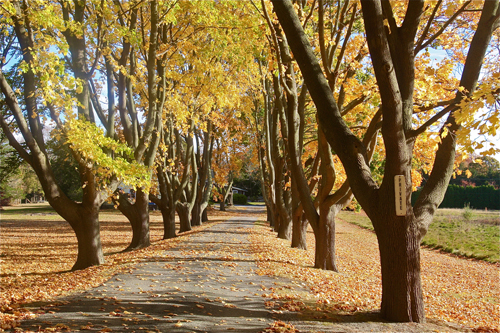 BARBARAELLEN KOCH PHOTO | A private road in Cutchogue during foliage season.