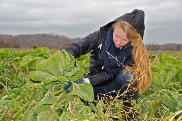 Megan Van Bourgondien, 17, gathering produce.
