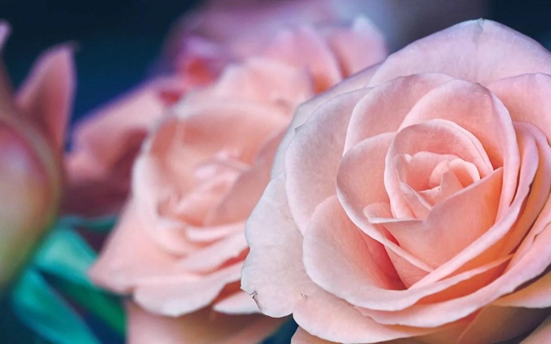 Audio: The 99 Beautiful Names Of Allah